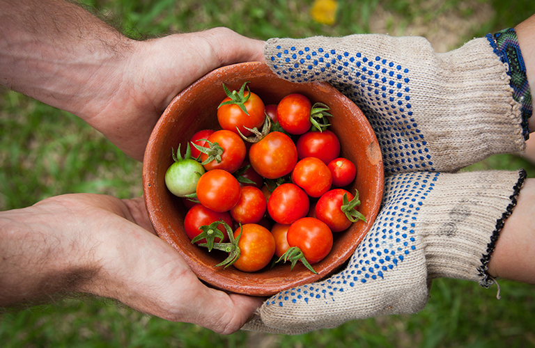 Schale voller Tomaten gehalten von zwei Händen