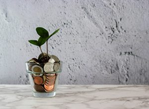Pflanze im Münzglas