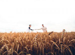 Zwei Personen reichen sich auf einem Feld die Hand