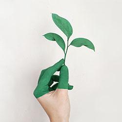 Hand hält Pflanze