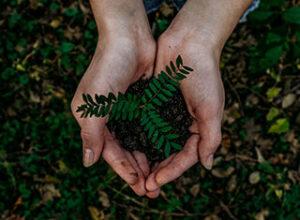 Guerilla Gardening - Hand hält Pflanze