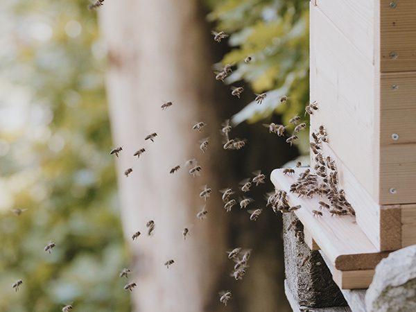 BE WILD: Still aus Film - Bienen